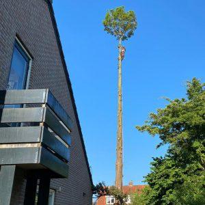 bomen-kappen